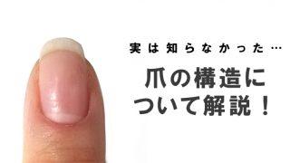 爪の構造について